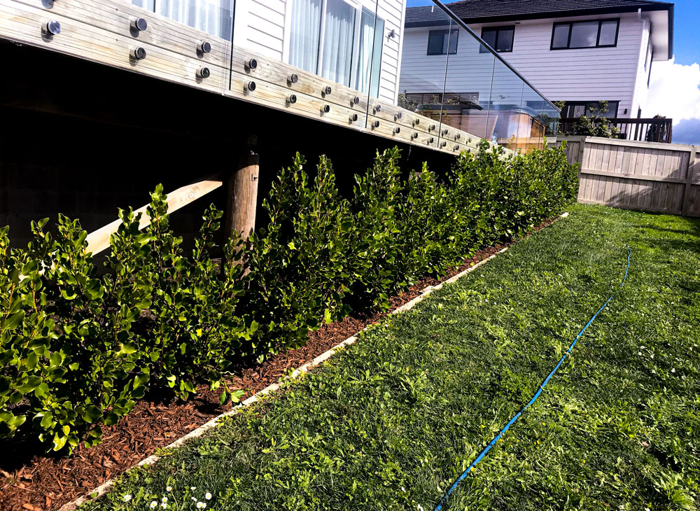garden maintenance auckland
